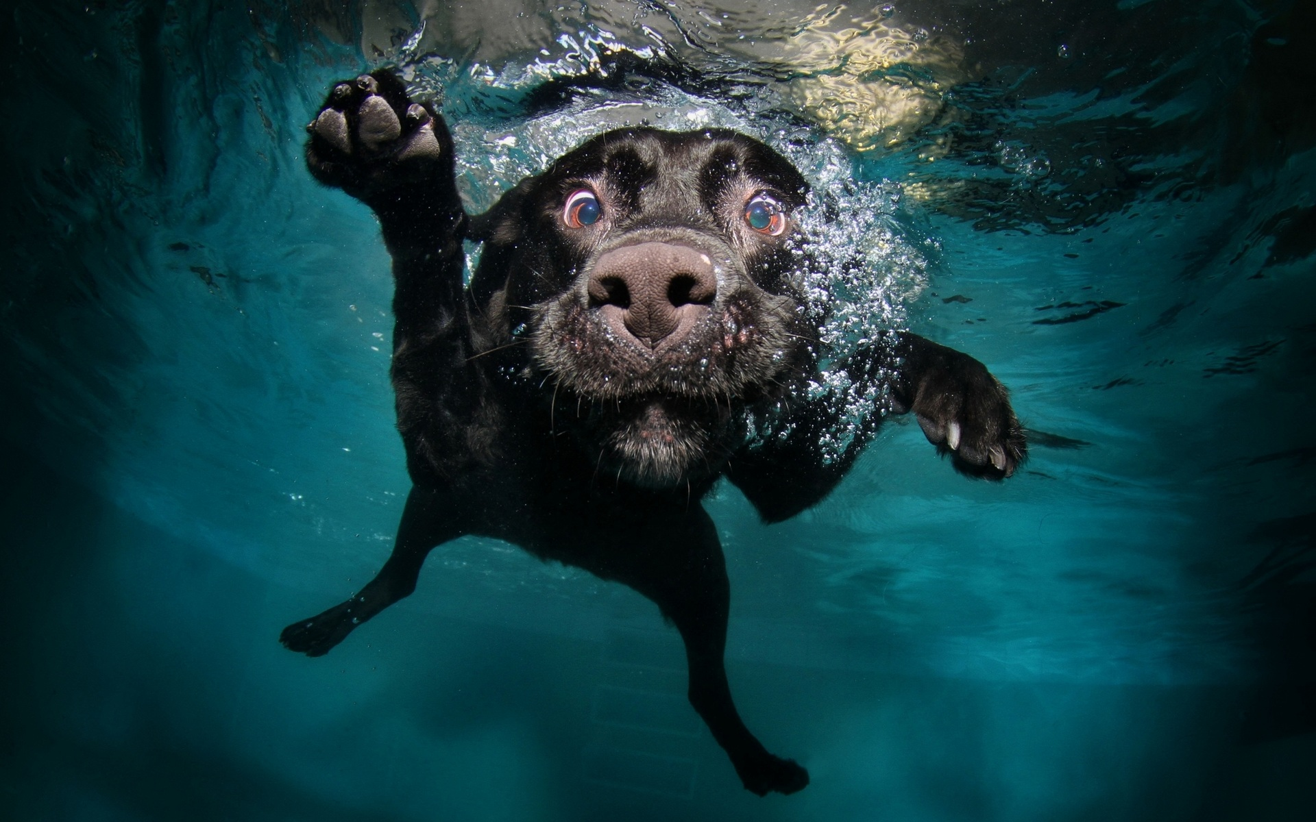 Quirky image of underwater dog that went viral